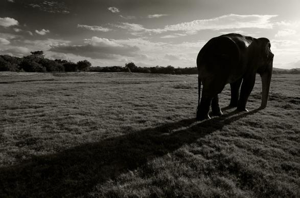 Travel, Window or Aisle, Elephants, Arati Rao