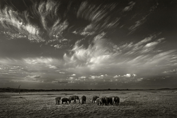 Travel, Window or Aisle, Elephants, Arati Rao